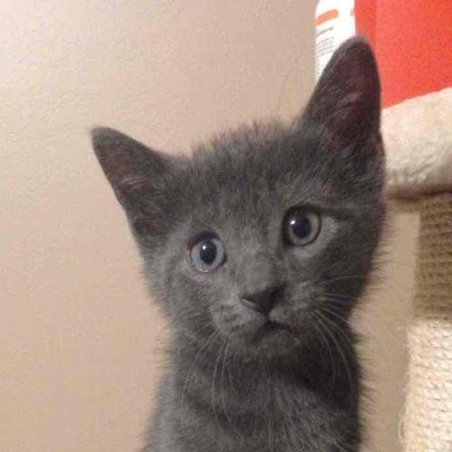 Foster Kitty
